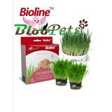 Bioline Kit Germinar Hierba Fresca Para Gatos Bloopets Chile