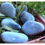 Celestina Piedra Natural Para Sanación $ 3000