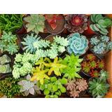 Cactus Y Suculentas A Precio Outlet Gran Variedad Cantidad
