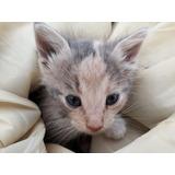 Gatos. Gatitos En Adopción