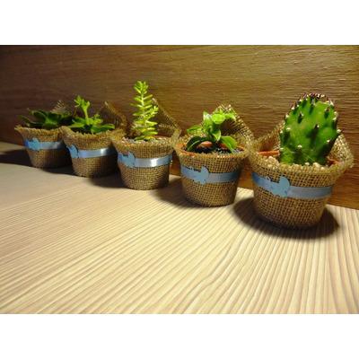 Recuerdos De Bautizo Con Cactus.Compra Recuerdos Bautizo Baby Shower Cactus Suculentas Para