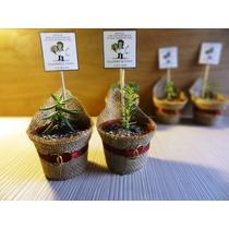 Cactus Souvenir Ecológicos Para Matrimonios Bautizos Y Más