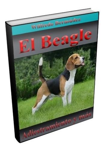 El Beagle Adiestramiento Y Mucho Mas.