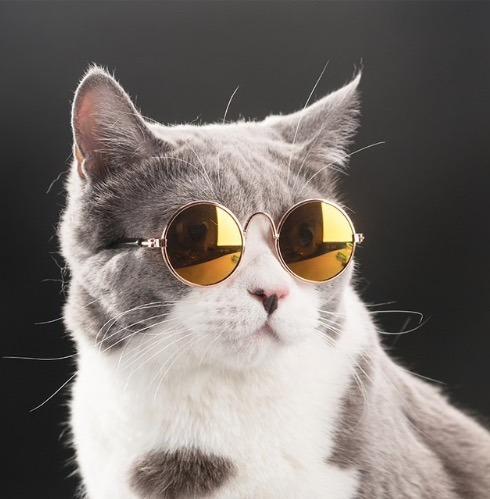 10 Gafas Para Gatos Y Perros Pequeños Envio Gratis