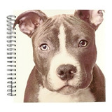 Perros Pitbull  Pit Bull Terrier Cachorro  Dibujo Libro