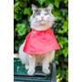 Collares Isabelinos Para Gatos - De Tela