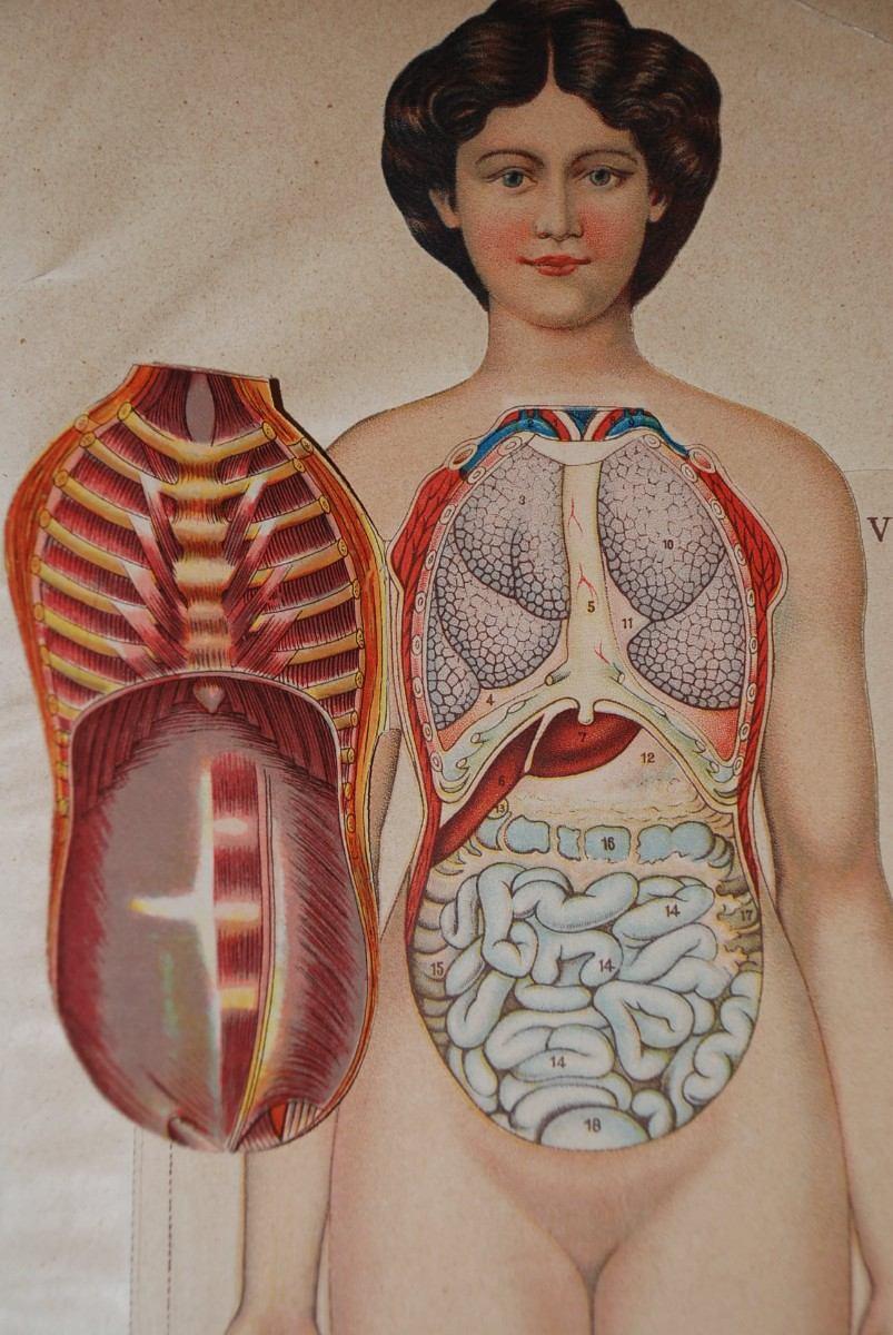 la medicina humana: