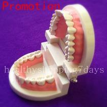 Arcada Dental Para Estudio Y Practica