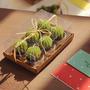 Velas Gift Set 6 Unidades Forma De Cactus Miamistore