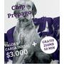 Chip Prepago Wom - $ 3.000, 250mb, 50min