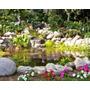 Estanques De Agua Para Tu Jardín / Parcela