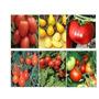 Semillas De Tomate Mix 12 Variedades, Envío Gratis, Oferta