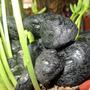 Turmalina Negra Cuarzo Protector Envidia Y Maldad Desde$3000