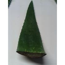 Palmetas De Aloe Vera!