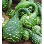 Semillas De Calabaza Ganso, Ideal Artesanía, Envío Gratis