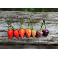 Semillas De Ají Boliviano, Mix Colores, Envío Gratis, Oferta