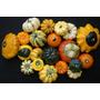 Semillas De Calabazas Ornamentales, Mixtas, Envío Gratis