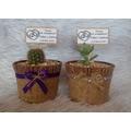 Hermosos Cactus Y Suculentas Souvenirs