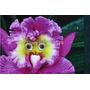 Semillas Orquideas Raras